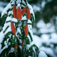 З першим днем зими :: Степан Карачко