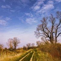 Дорога в осень :: Нина Богданова
