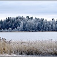 Мороз на озере  разрисовал деревья за одну ночь. :: Ольга Митрофанова