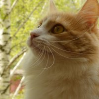 Кот по имени Печалька. :: Galina Serebrennikova