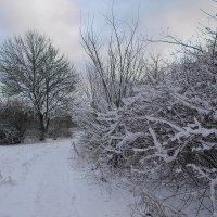 Укрыло снегом Царское Село..... :: Tatiana Markova