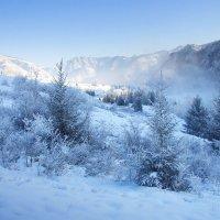 Морозное утро :: Дмитрий Сенотрусов