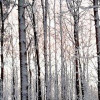 Зимним утром :: Светлана Дунаева