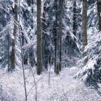 2 декабря :: Игорь Свет