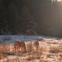 Лошади в горах :: Горный турист Иван Иванов