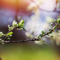 сны о весне :: Эльмира Суворова