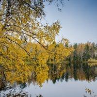 золотая осень :: Елена Кордумова