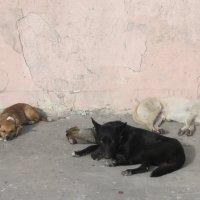Вот она собачья жизнь :: Александр Скамо