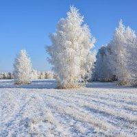 Зима  пришла  по  расписанию :: Геннадий Супрун