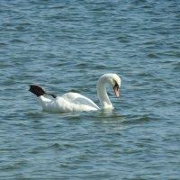 Упражнения на воде :: Natalia Harries
