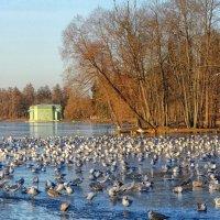 На зимовке... :: Elena Ророva