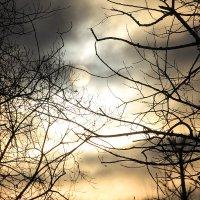 Вечером мир всегда прекрасней...... :: Tatiana Markova