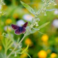 опять про бабочек...98 :: Александр Прокудин