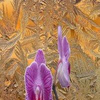 Орхидея за окном :: irina Schwarzer
