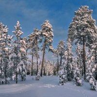 зимний лес в объятьях тишины... :: Татьяна .