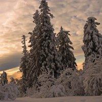 На закате. :: Galina Serebrennikova