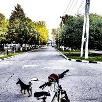 Самый надёжный караульный на бульваре. :: Бронислав Богачевский