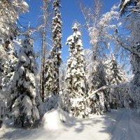 Ёлочки в зимнем лесу :: Андрей Снегерёв