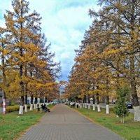 Осень в городе. :: Николай Масляев