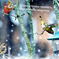 Совет от гномика в уходящем году. :: Татьяна Помогалова