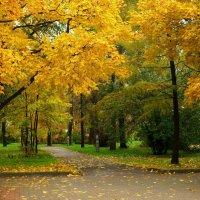 Пусто в мокром парке... :: Кулага Андрей Андреевич