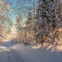Солнечное утро :: Vladimbormotov
