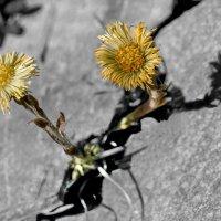 В ожидании Весны :: Александр Белый