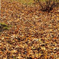 ковровое покрытие осени :: Бронислав Богачевский