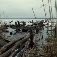 Озеро Чёрное :: Константин Тимченко