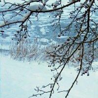 Замерзший боярышник :: Сергей Карачин