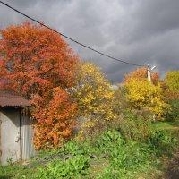Осень в Подмосковье :: Дмитрий Никитин