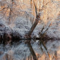 Солнечным морозным утром... :: Alex ARt