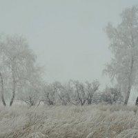 Туманный день. :: сергей