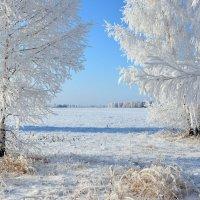 Палитра  зимы :: Геннадий Супрун