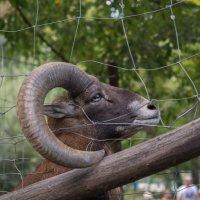 Зоопарк в Будапеште :: Анна Углова (Рыбакова)