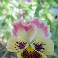 Красивый цветочек :: Дмитрий Никитин