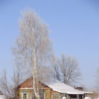 Изба и береза :: Иван Семин