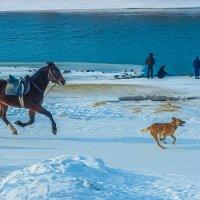 Пёс и конь :: Игорь Герман