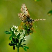 опять бабочки...40 :: Александр Прокудин