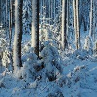 Природа Швеции :: Alm Lana