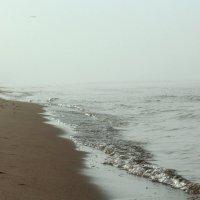 Море в тумане :: Inga Catlaka