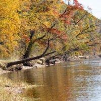 Золотая осень :: Olga Dudina