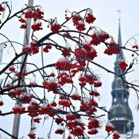Про башню, мороз и рябину... :: Рита S
