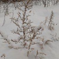 Вот и зима пришла. :: Галина