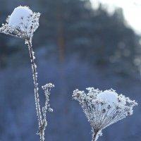 """Зимние """"цветы"""" :: Зинаида Каширина"""