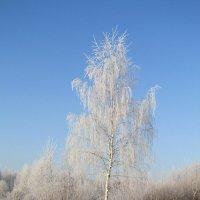 Зимняя берёза :: Андрей Снегерёв