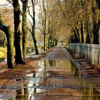 Осенью в Ал. парке ЦС :: Сергей