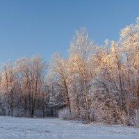 Вечерняя седина леса :: Виктор Замулин
