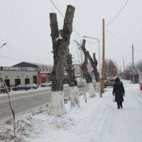Новый метод обрезки деревьев :: Владимир