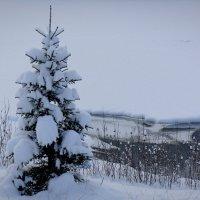 Друзья мои! Снега по колено! Я радуюсь. :: Зинаида Каширина